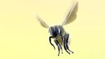 Bee_1280x720