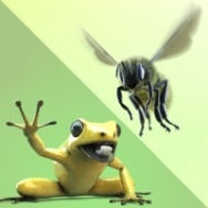 Bee and Frog